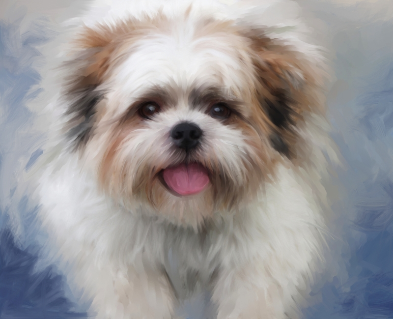 SHIH TZU RESCUE Non Profit Animal Shelter and Sanctuary in