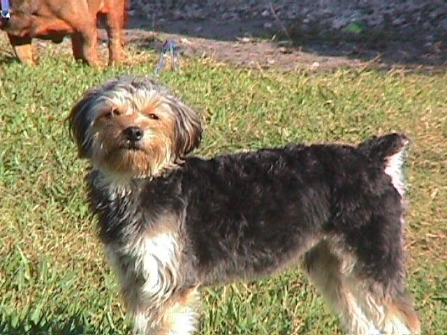 SHIH TZU RESCUE Non Profit Animal Shelter and Sanctuary in